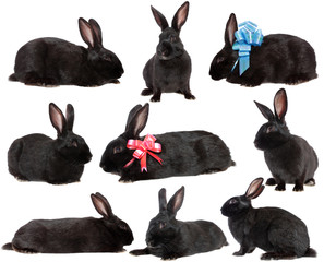 set  rabbits.