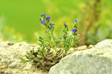 Summer flowers among grey stones