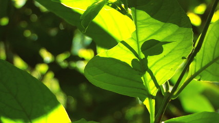 Lush Green  Rainforest Flora with Audio