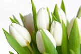 Fototapeta blumenstrauß-weiße tulpen