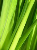 Green Vital poster