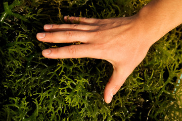 woman's hand on a background of green grass