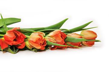 rote Tulpen - Reihe