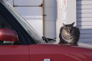 cat on the car 02