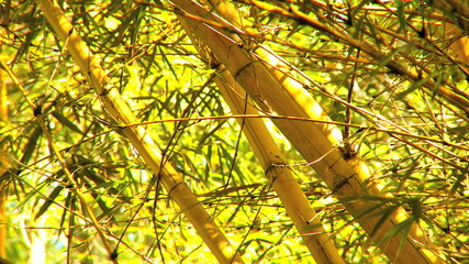 Rainforest Bamboo Trees