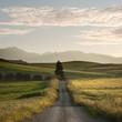 Rural Road Crosses Yellows Fields