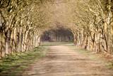 allée parc jardin promenade arbre sous bois