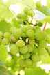 white grapes.