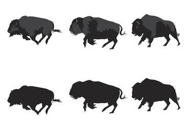 American bison galloping