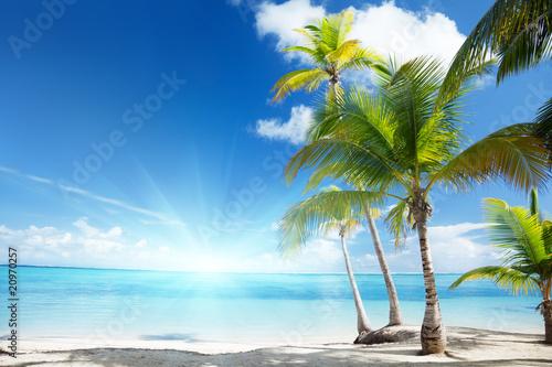 Karibisches Meer und Kokosnusspalmen