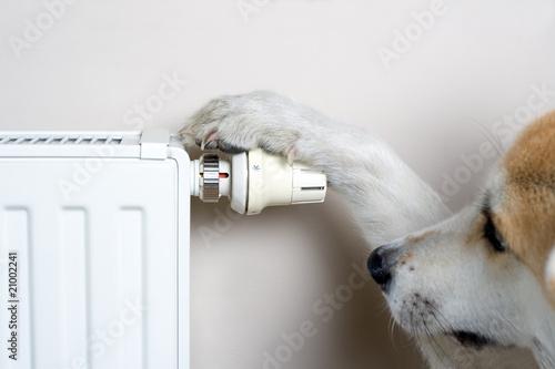 Dog adjusting comfort temperature on radiator - 21002241