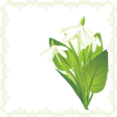 Bouquet of snowdrops in the decorative frame. Vector