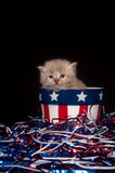 cute gray kitten and Fourth of July decorations poster