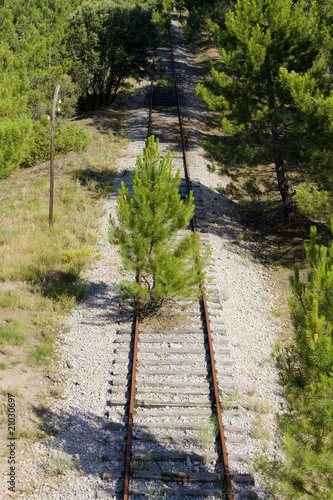 overgrown tracks, Soria Province, Castile and Leon, Spain