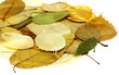 feuilles sèches automne fond blanc