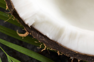 coconut and palm leaf. exotic scene