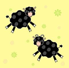 Sheeps black
