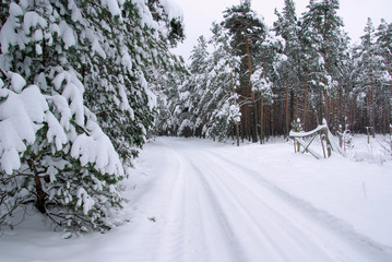 Wald im Winter - forest in winter 40