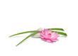 Fleur de lotus, Galets et brins d'herbes