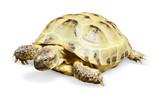 reptile turtle animal poster