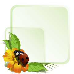 Ladybird and flowers