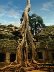 Giant trees over Ta Prohm temple in Angkor Wat, Cambodia