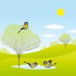 roleta: Spring forest