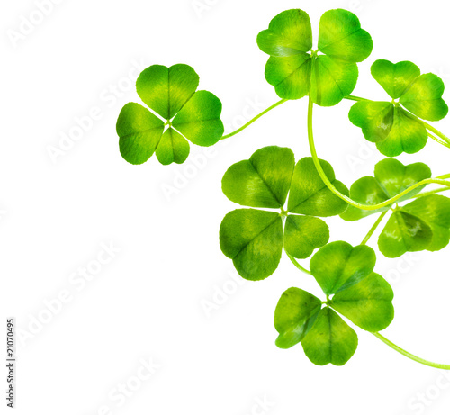 St.Patric's Day border. Lucky Clover