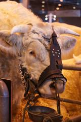 animal ferme vache 17