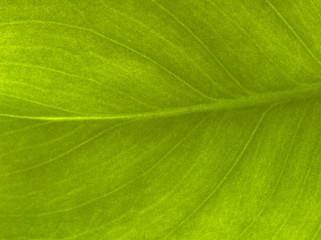 Plantleaf