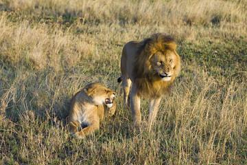 Lion Fight