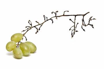 Racimo de uvas picoteado.