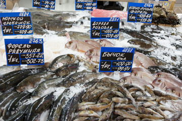 Great variety of fish on market display