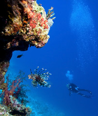 Lionfish and Woman Scuba Divers near Coral Reef