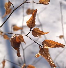 Welke Blätter am Baum