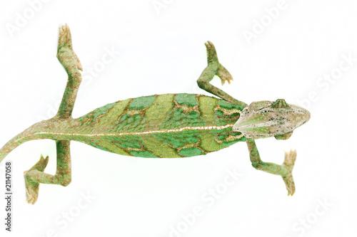 Fotobehang Kameleon Big chameleon on white background