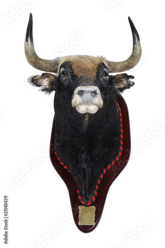 stuffed bull's head
