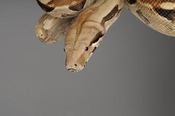 Schlange kommt auf mich zu