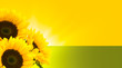 sunflowers and summer on yellow green background - border