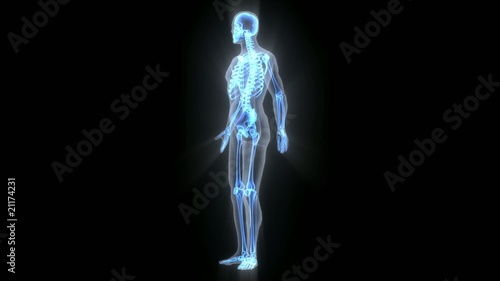3D X-ray human with bone growth and rotated– HD, Loopable