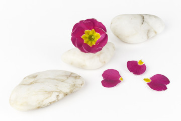 wellness and spa: flowers,pebbles
