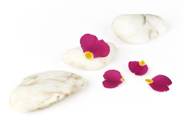 wellness and spa: pink petals,pebbles,zen still life, isolated o