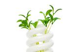 Energy saving lamp with green seedling on white