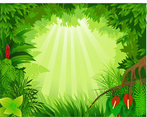 Beautiful tropical forest vector illustration