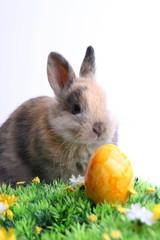 Osterhase mit gelbem Ei