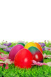 Ostereier auf Blumenwiese - easter eggs on flower meadow 40