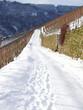verschneiter Weinbergsweg..