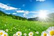 Leinwandbild Motiv Frühling in den Alpen mit Margeriten und Blumenwiese