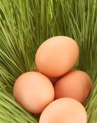 Eggs of a bird in a green grass