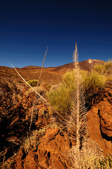 Teide Nationalpark im November